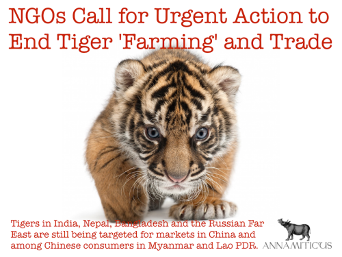 "Tiger ""farming"" has been allowed to drag on for too long. It is time for more decisive action towards achieving Zero Demand, and to hold accountable those countries that are implicated in tiger ""farming"" and trade in captive tiger parts and products."