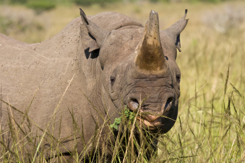 Wildlife farms, captive breeding operations and some zoos may be involved with laundering illegally acquired wildlife is just one of the key findings of a new UNODC report. Photo: istockphoto.com