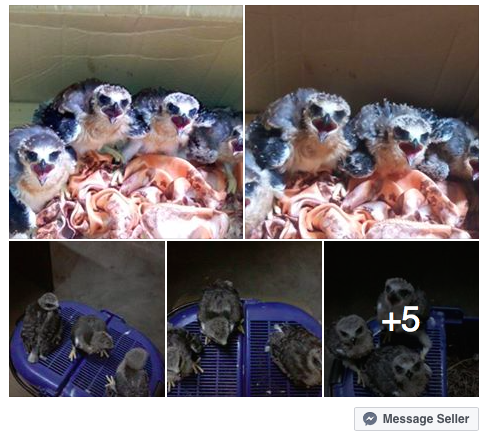 Please report Peminat Haiwan Exotic Malaysia  to Facebook.