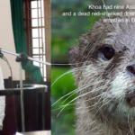 Vietnam: Online Wildlife Trafficker Gets Five Years in Prison