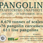 Shocking Figures Reveal Deadly Reality for Pangolins