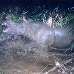 The Rhino Extinction That Launched Annamiticus