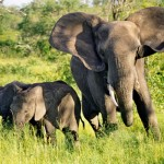 U.S. Senate Hearing: Elephant Killings, Ivory Trade Undermining Global Security