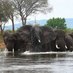 Zambia: 3 Tons of Ivory Stolen, 2 Game Scouts Arrested