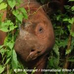 2012 Declared International Year of the Rhino
