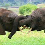 Central African Countries Reach Agreement to Combat Illegal Wildlife Trade