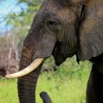 Sri Lanka Seizes Nation's Largest Ever Illicit Ivory Haul