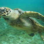 Philippines: 14 Endangered Sea Turtles Rescued from Chinese Traffickers
