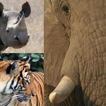 Report: Asian, African Countries Failing to Control Illegal Wildlife Trade