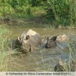 Nepal: 14 Rhino Horn Traffickers Sentenced to Jail