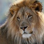 Zambia: Moratorium Placed on Trophy Hunting Amid Corruption Concerns