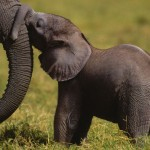 Thailand: Prime Minister Urged to Ban All Ivory Trade