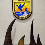 'Operation Crash': NY Antiques Dealer Sentenced to Prison for Rhino Horn Trafficking