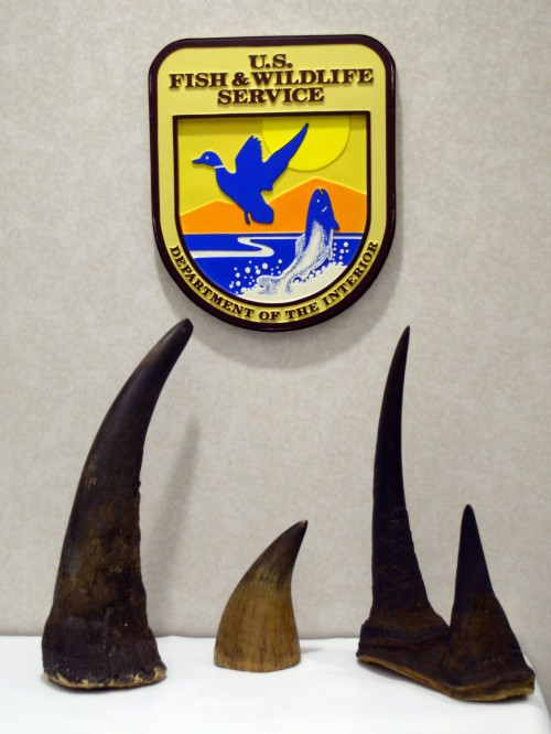 Chinese business executive Shusen Wei has pleaded guilty to Photo: Nan Rollison / USFWS