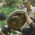 Indonesia: 26 Pangolins and 10 Pythons Seized from Smugglers