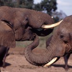 Obama to Tackle Africa's Wildlife Trafficking Crisis