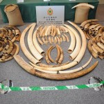 Hong Kong Vows to Take Action Against Ivory Smugglers