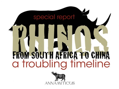 South Africa has exported more than 100 white rhinos to China since 2006. Image © Annamiticus