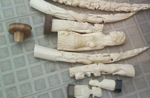 Two ivory traders were arrested in the Congo during a two-week span. Photo: PALF