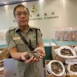 Pangolin Scales Seized in Hong Kong, 2 Arrested [Photos]