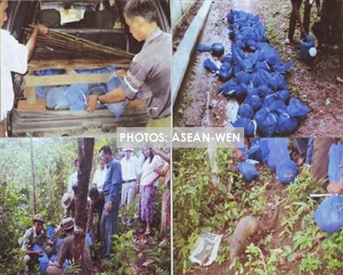 Myanmar authorities rescued and released 47 pangolins into the wid and arrested one smuggler. Photo via ASEAN-WEN