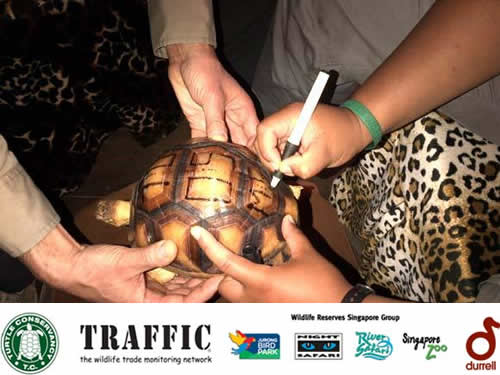 Engraving a tortoise's shell makes it less desirable to traffickers and easier for enforcement agencies to trace.
