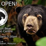 Malaysia's Sun Bear Rescue Center Opens to Public on January 17