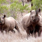 U.S. Sentences Rhino Horn Trafficker Michael Slattery Jr. to Prison