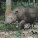 Asian Rhino Range Countries Support Continued Ban on Rhino Horn Trade