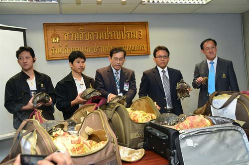 Authorities in Thailand display some of the reptiles seized at Don Mueang Airport. © Royal Thai Customs, courtesy of TRAFFIC
