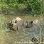 Proposed Highway Plans to Cut Through Nepal's Chitwan National Park