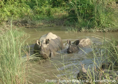A proposed highway to cut through Chitwan National Park would have a devastating impact on Nepal's exemplary conservation efforts. Photo © Suman Bhattarai / Annamiticus
