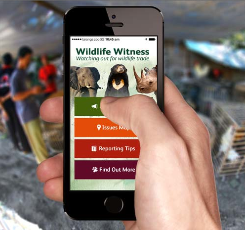 Suspected illegal wildlife trade can now be reported with an app. Photo courtesy  of TRAFFIC