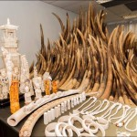 Hong Kong Lawmakers Move Toward Total Ivory Ban Following Stockpile Burn