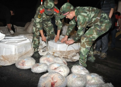 Nearly 1,000 dead pangolins were seized by Chinese authorities. Photo via news.163.com