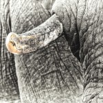 Tourism Expert Criticises SA Minister's Views on Ivory Trade