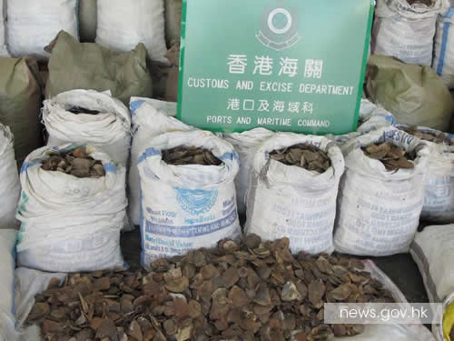 For the second time in eight months, Hong Kong Customs officers intercepted a shipment of pangolin scales smuggled from the African continent. Photo via news.gov.hk