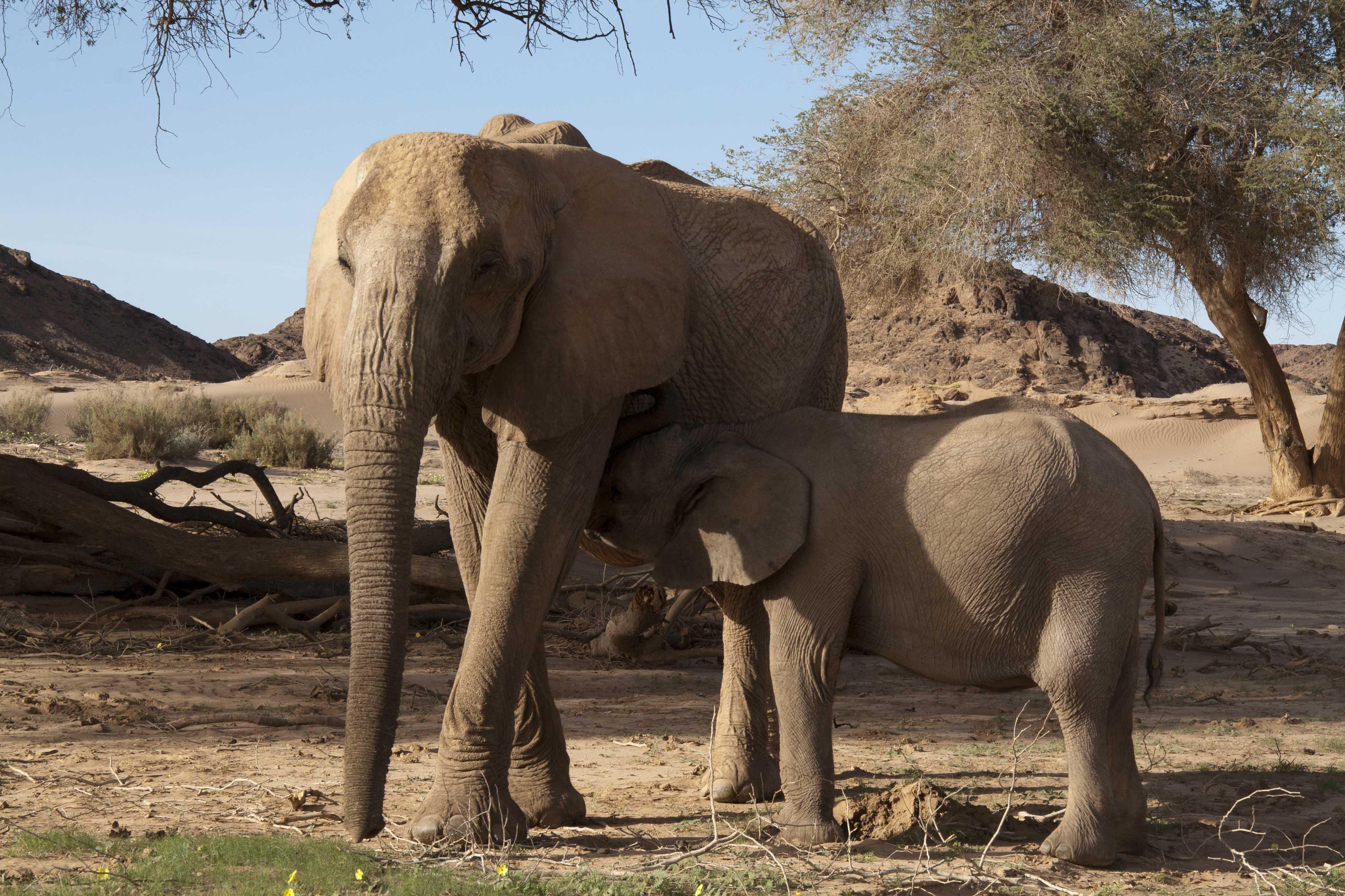 to shoot an elephant