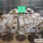 2 Tons of Pangolin Scales from Cameroon Seized in Hong Kong