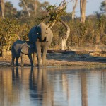 US Upholds Ban on Elephant Trophies from Rogue States