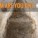 Rhino Conservation Groups Unite for World Rhino Day with the Kickoff of Team Rhino