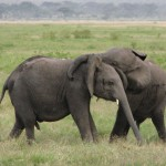 California to Close Ivory and Rhino Horn Trade Loopholes