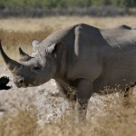 Culture of Secrecy Hampers Namibia's Efforts to Protect Rhinos