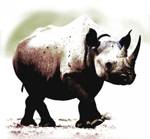 There is no scientific evidence to support claims of rhino horn's curative properties.