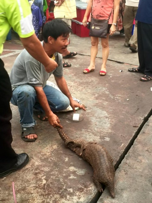 Do you recognize this pangolin trader? Please call local authorities so these pangolins have a chance to be rescued.