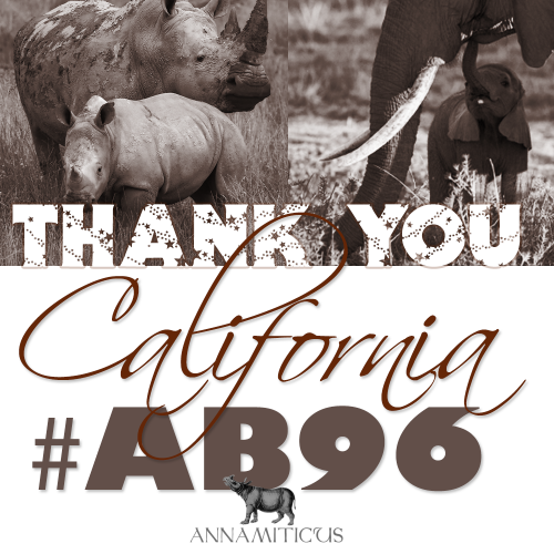 AB 96 passed the Senate floor on a 26 - 13 vote and removes California's exemption for ivory and rhino horn imported prior to January 1, 1977. Image © Annamiticus