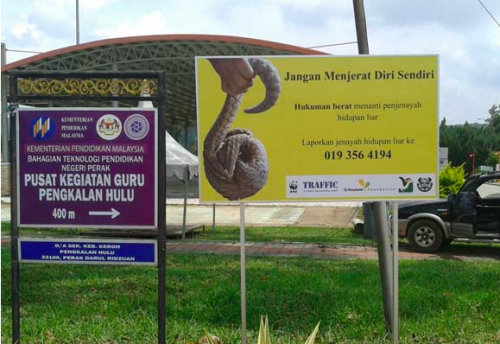 To encourage communities in areas surrounding the Belum-Temengor Forest Complex to participate in fighting wildlife crime, TRAFFIC has put up signboards in the town of Pengkalan Hulu, with more to follow in Gerik. Photo © TRAFFIC