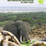 Fraudulent Tusk Registration Fuels Illegal Ivory Trade in Japan