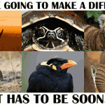 Wildlife Crime: If We're Going to Make a Difference, It Has to Be Soon