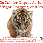 NGOs Call for Urgent Action to End Tiger 'Farming' and Trade